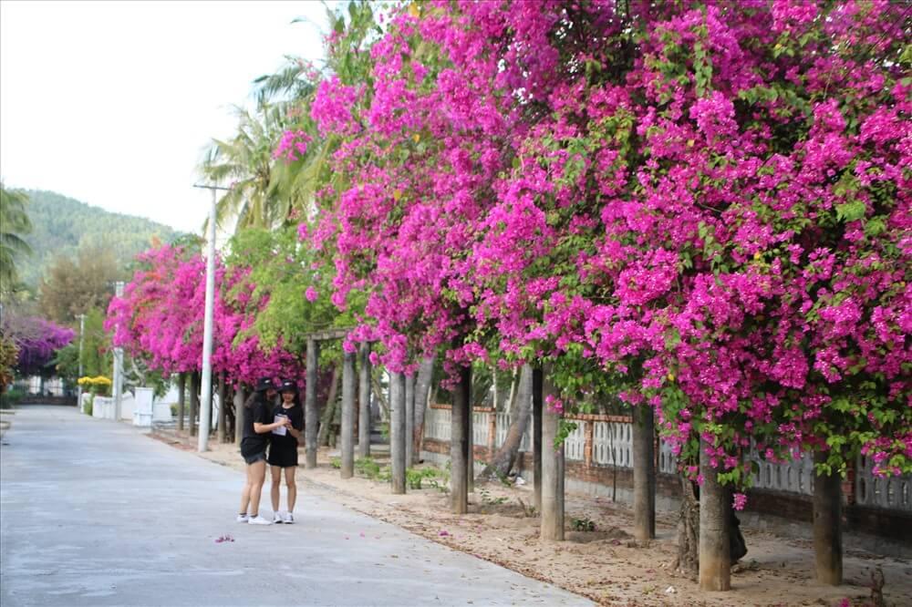 Làng Phong Quy Hòa.
